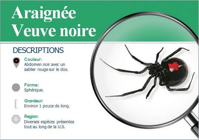 exterminateur d 39 araign es montr al biz exterminateur gestion parasitaire. Black Bedroom Furniture Sets. Home Design Ideas